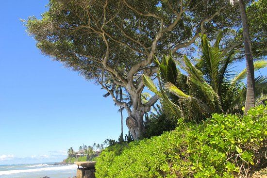 Paia Inn: coffee on the beach