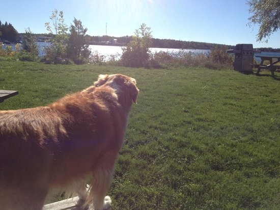 Wireless Bay Cottages : Dog friendly place.