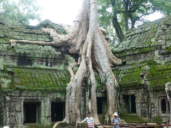 Angkor Archaeological Park: Ta Prohm