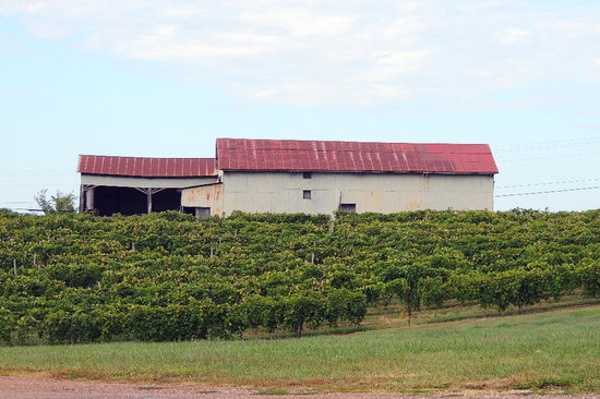 Les Bourgeois Winery and Bistro: Winery grounds