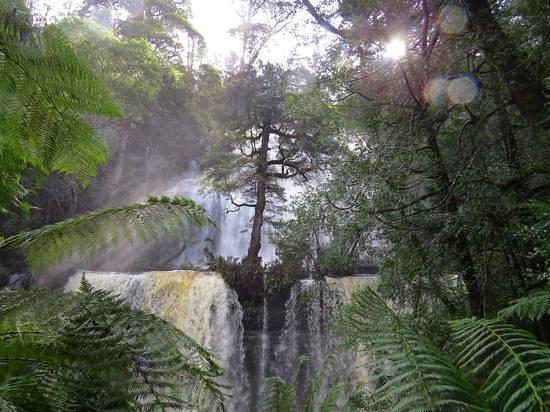 Russell Falls : Russel Falls