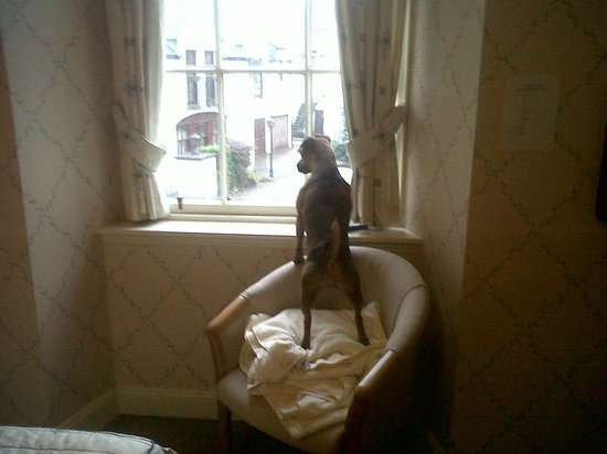 The Royal Dunkeld Hotel: Ruby looking out of our window