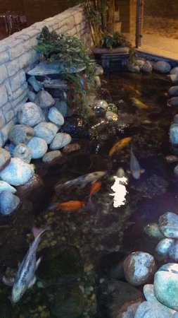 Novi Oaks Hotel : Water feature with Koi