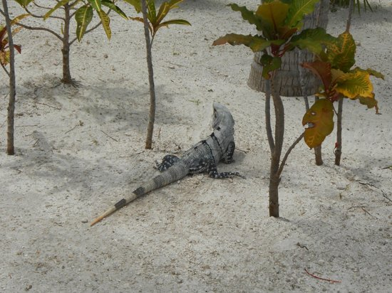 Beloved Playa Mujeres: Our little friend..