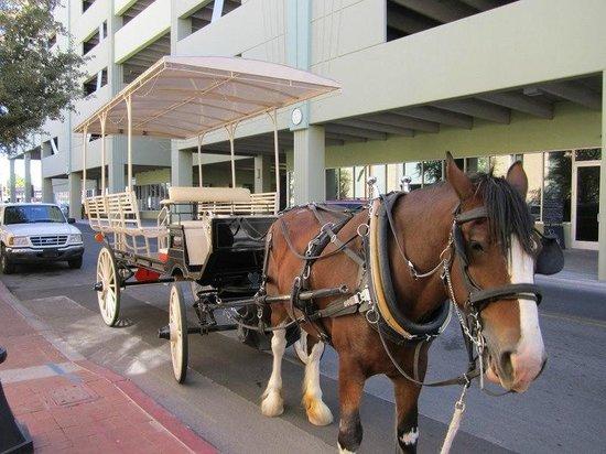 Sentinel Carriage Company: Fun buggy ride
