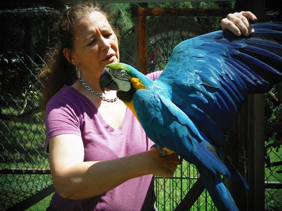 Naalehu, HI: Many exotic birds, this is Jericho