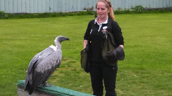 Aillwee Cave : Niamh and Dyson, the African Vulture