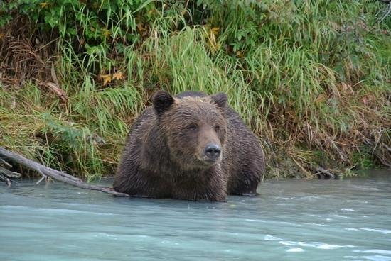 Summit Lake Lodge: fly in fishing and bear watching trip