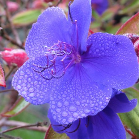 Bodega Bay Lodge: Another beautiful flower near the parking lot