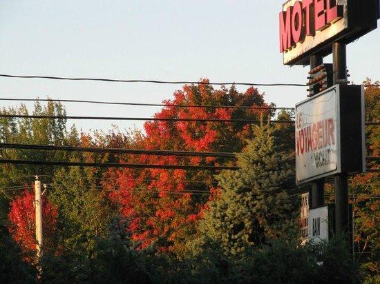 Motel Le Voyageur : Bellissimi aceri dalla finestra della stanza