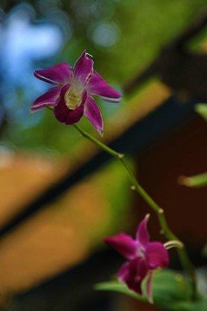 Lawana Resort : Amazing gardens and flowers