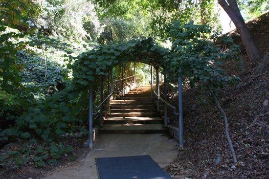 Strange Plant Picture Of University Of California Riverside Botanic Gardens Riverside