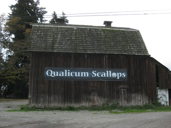 Island Scallops : You can't miss their sign if driving south on West Island Highway.