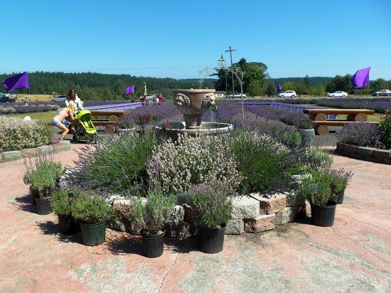 Sunshine Herb and Lavender Farm: July Festival