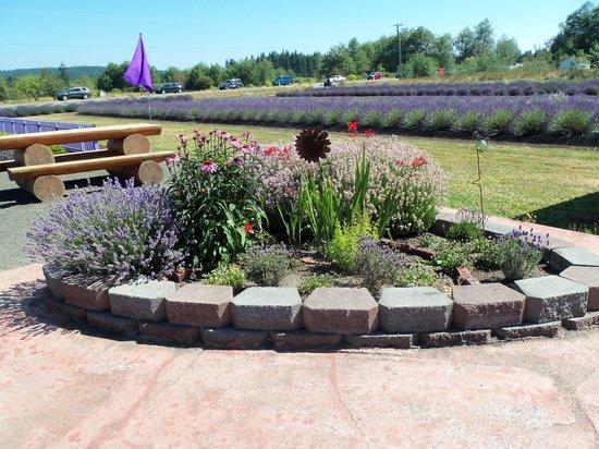 Sunshine Herb and Lavender Farm : The Fountain area