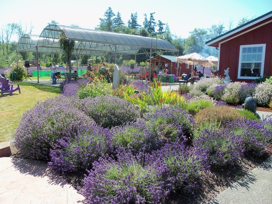 Sunshine Herb and Lavender Farm: Some of the landscaping
