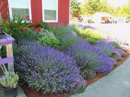 Sunshine Herb and Lavender Farm: Around the Gift Shop