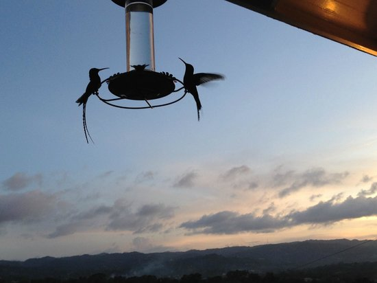 The Blue House Boutique Bed & Breakfast: Off the deck - hummingbirds liked to show off.