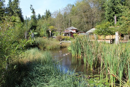 The Ecolodge at the Tofino Botanical Gardens : The Gardens