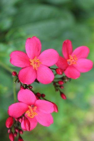 Rainbow Botanic Gardens: pink