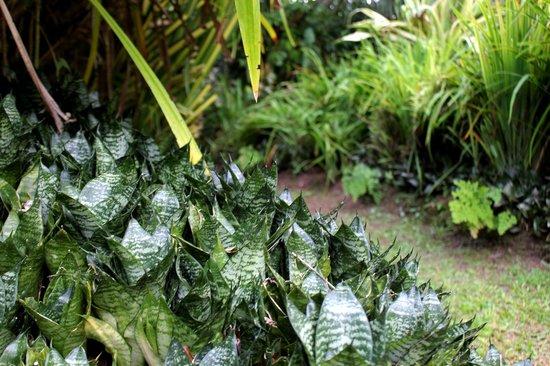 Rainbow Botanic Gardens: lush