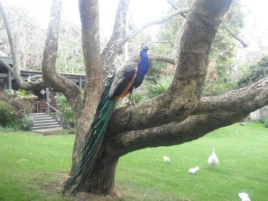 Katikati Bird Gardens: Pride of place