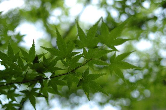 Watanabe Inn: 春の新緑と