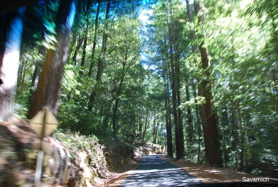 Big Basin Redwoods State Park: Road exiting from the park