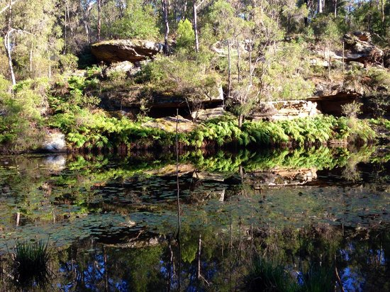 Billabong Retreat Sydney: Beautiful natural setting