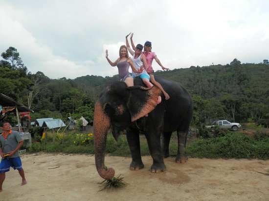 Pang Chang Kamala: Happy, friendly, well-trained elephants.