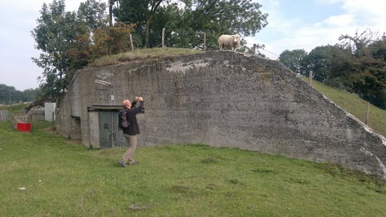 GeoFort: Sheep observing the visitors