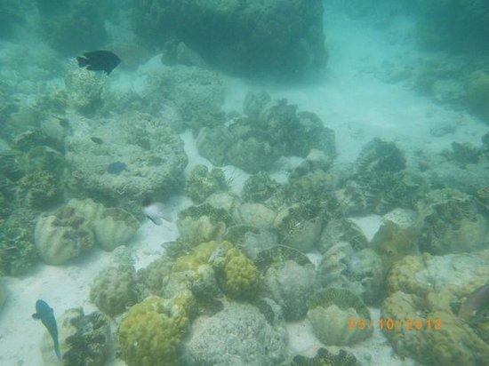 Banana Island : big clams