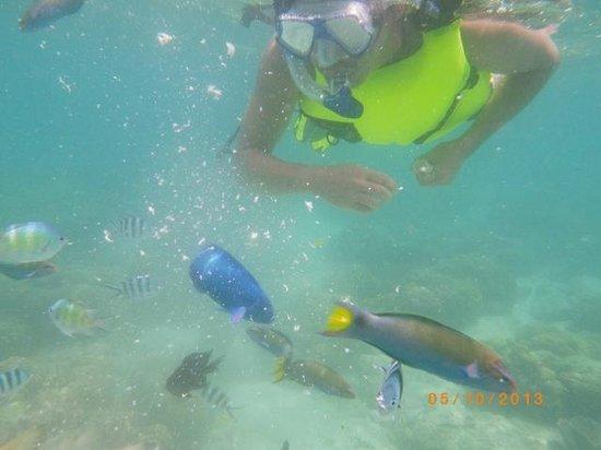Banana Island : fish feeding