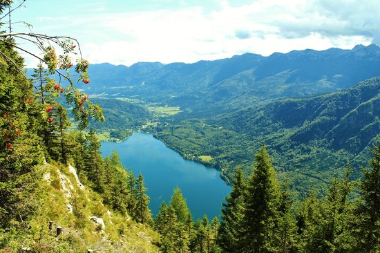 Hostel Bohinj : The Environment