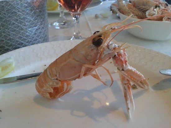 Hotel Restaurant Breiz Armor : Bel animal !