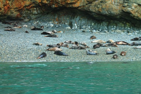 Voyages of Discovery (Ramsey Island): Seals basking in the sun