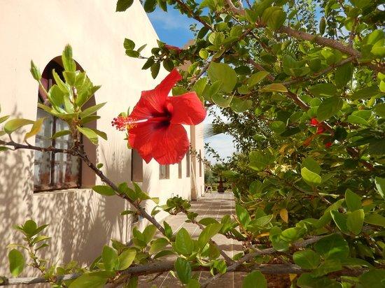 Riad Qodwa: Garden
