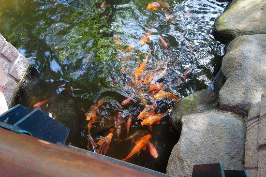 Hoang Ngoc Resort: рыбки плавают везде по всему отелю