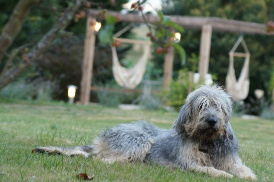 The Barns Dans Les Pyrénées : Bernie the dog waiting for us to retire to the hot tub