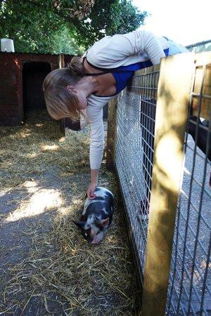 Longdown Activity Farm: Cute little pigs