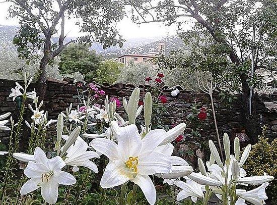 Casa Javier: Jardin