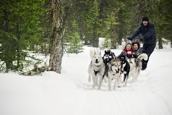 Canmore, Canada: Dog Sledding in Spray Lakes