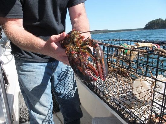 Robertson Sea Tours & Adventures: Hauling Up the Catch