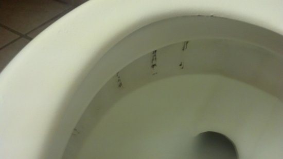 Hotel Morgantown and Conference Center : dirty toilet