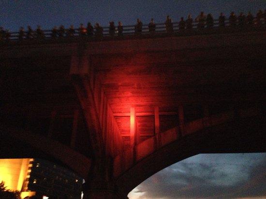 Congress Avenue Bridge / Austin Bats: Bats under the bridge! The red light helped us see