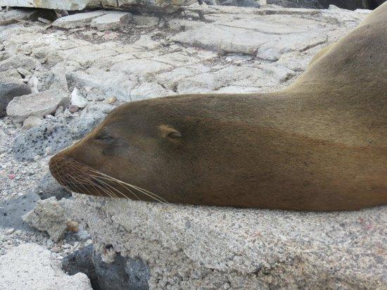 Punta Carola: lobo marino