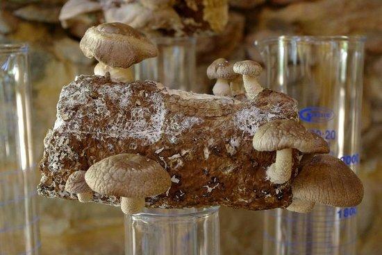 Babylonstoren: Mushrooms