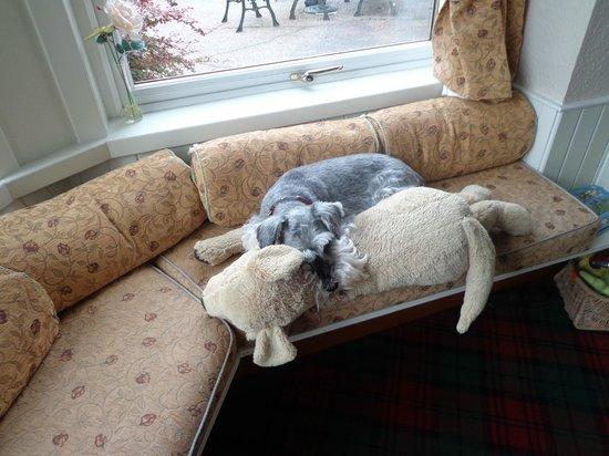 Mansewood Country House: Le chien de l'hôtel
