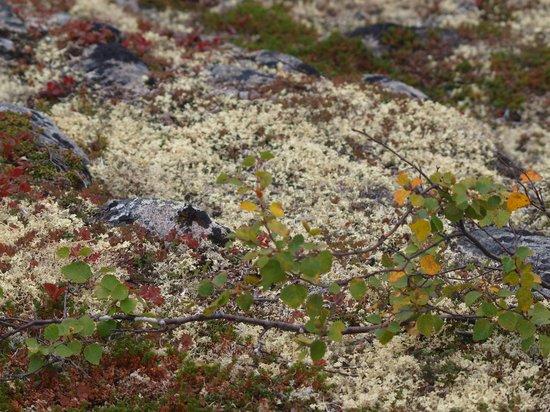 Caribou Lodge Alaska: Efteråretes farver