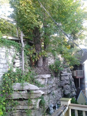 Daffodil Cottage at All Seasons Luxury Properties: tree from stone wall